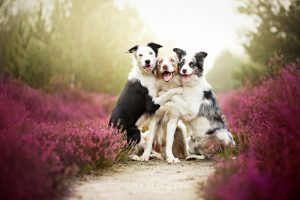 adorable-dog-photography-by-alicja-zmyslowska-1