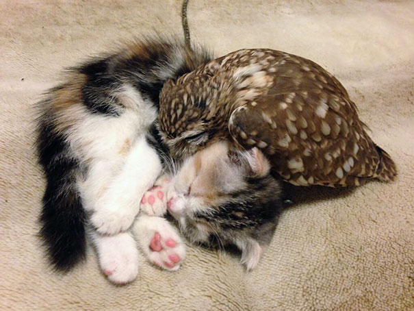 kitten-owl-best-friends-2