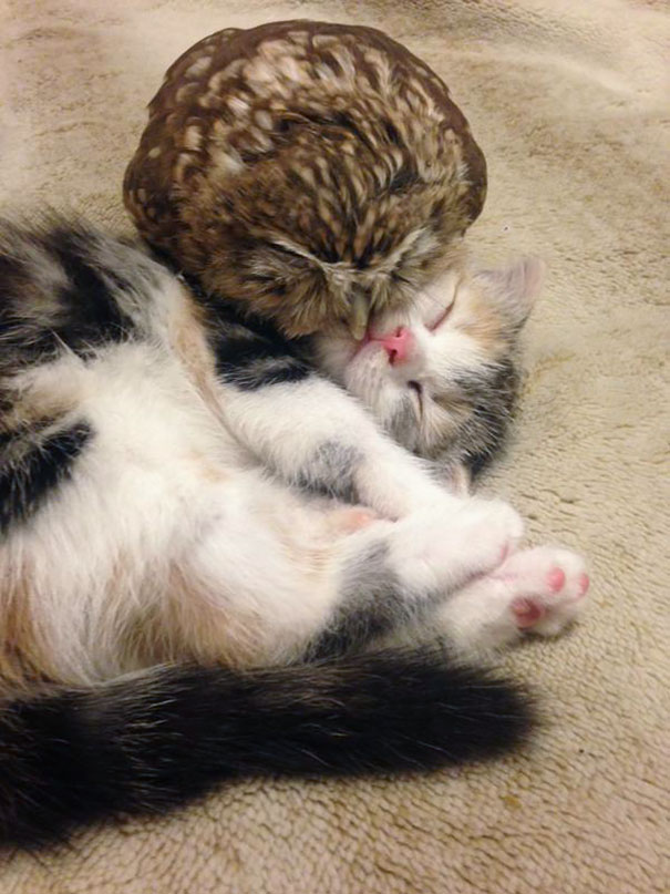 kitten-owl-best-friends-4