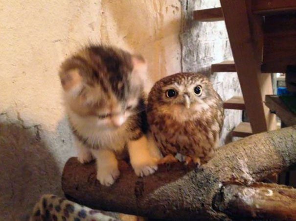 kitten-owl-best-friends-6