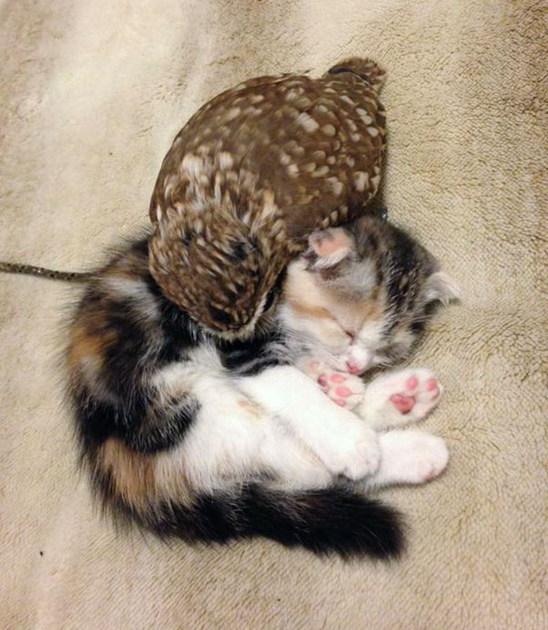 kitten-owl-best-friends-8