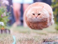 20 Perfectly Timed Cat Photos Taken At The Right Meowment