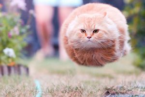 funny perfectly timed cat photo 1