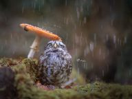 Cute Tiny Owl Photography by Tanja Brandt (11 Photos)