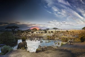 Serengeti National Park Tanzania 2015 Day to Night Photography by Stephen Wilkes 1
