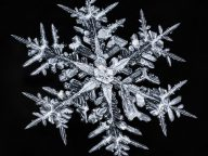 Stunning Close-Up Photos Of Complex Snowflakes Reveal A Surprising Fact…