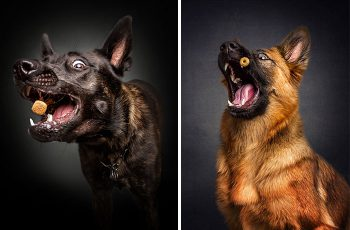 funny-dogs-catching-food-fotos-frei-schnauze-christian-vieler
