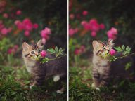 17 Pictures of Animals Smelling Flowers Is The Cutest Thing Ever