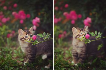 Animals Smelling Flowers  Pictures 2