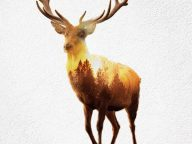 Animated Double Exposure Cinemagraphs Show The Endangered Lives Of Wild Animals