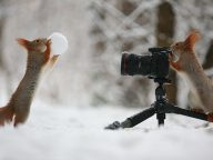 30 Cute Squirrel Photography