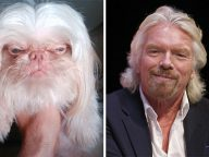 21 Animals That Totally Look Like Celebrities