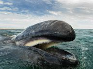 The Majestic Beauty Of Whales And Dolphins Photography