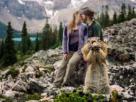 Hungry Squirrel Hilariously Photobombs Couple's Engagement Photo Shoot