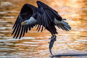 2016-national-geographic-nature-photographer-of-the-year-contest-1