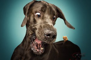 photos-dogs-catching-treats-1