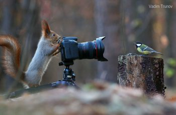 squirrel-photos-by-nature-photographer-vadim-trunov-5