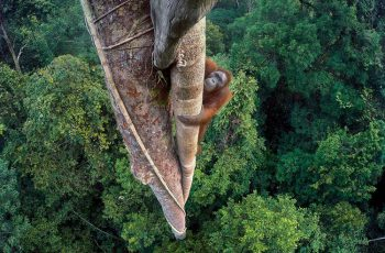 tim-laman-wildlife-photographer-of-the-year-grand-title-winner