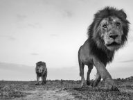 Extraordinary Up-Close Photos of Kenyan Wildlife