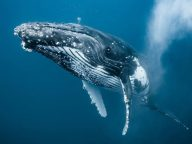 Breathtaking Underwater Photos of Newborn Whale in South Pacific