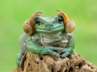20 Amazing Frog Photographs You've Never Seen Before