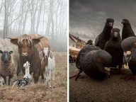 12 Amazing Animals Photos That Look Like They're About To Drop The Hottest Albums Of The Year