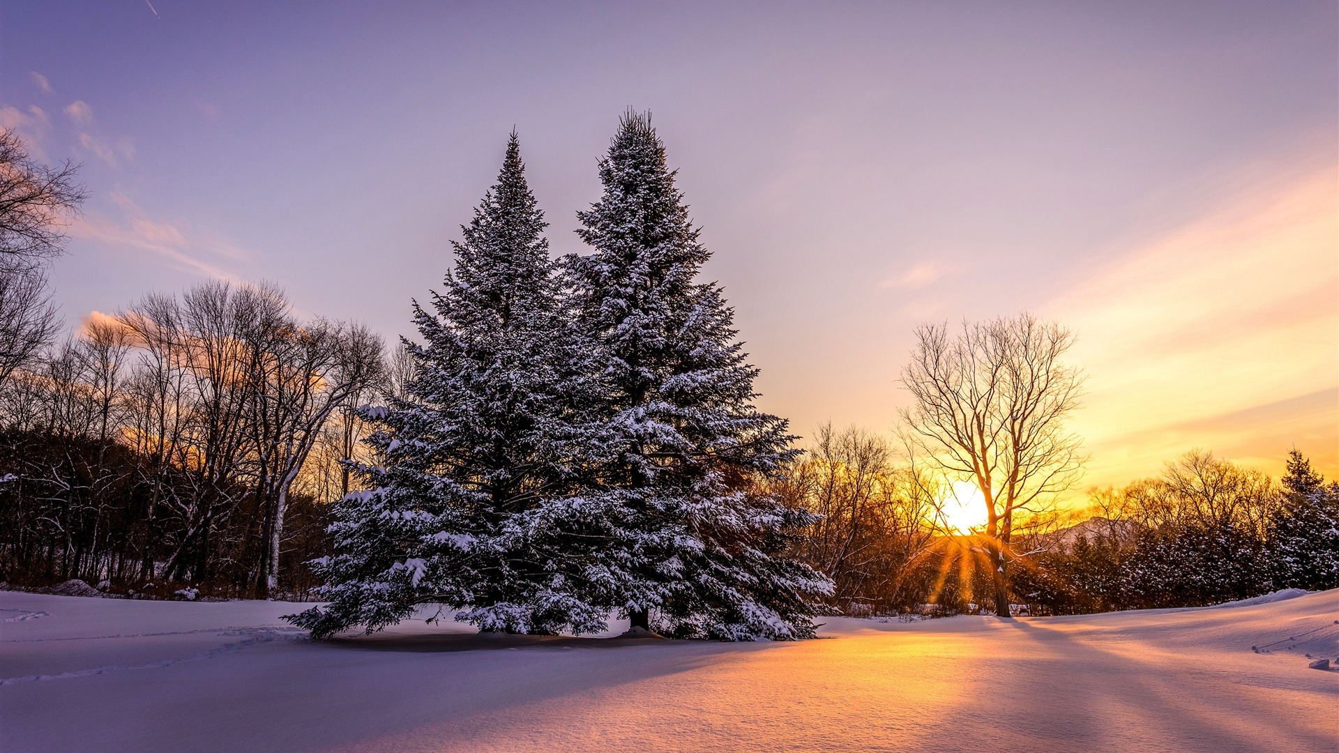 Winter Trees Sunset Photo Wallpaper 1920x1080